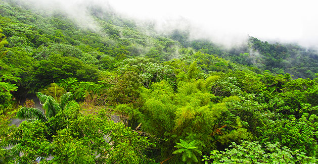 Planning a trip to El Yunque National Forest? Be sure to take bug spray. Photo: Theresa
