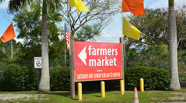 Attractions in Hollywood Beach - Yellow Green Farmers Market